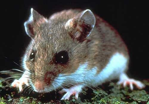 Rats And Mice End O Pest Provides The Best Pest Control